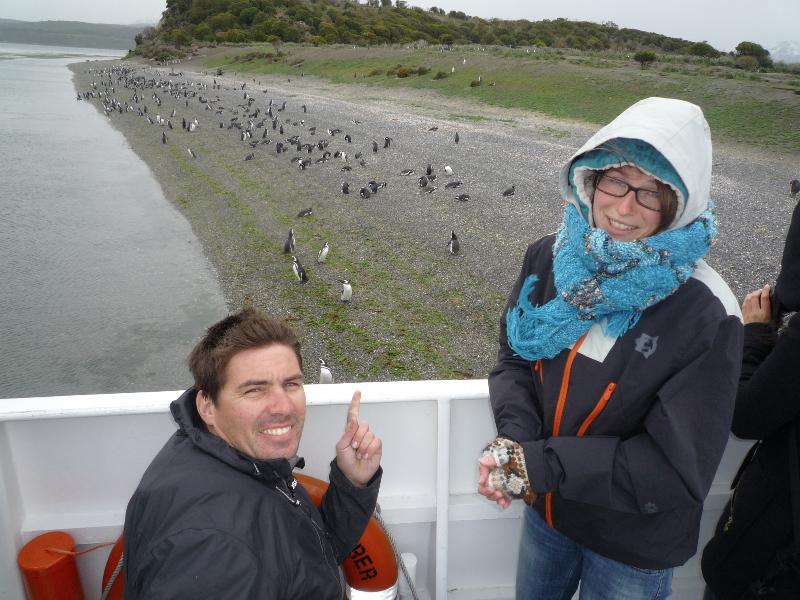 hp-pinguins