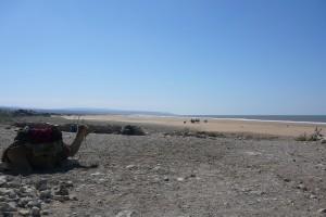 cameau-maroc-plage
