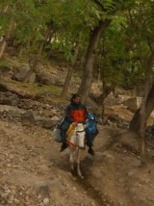 paraplegique-mule-randonnée