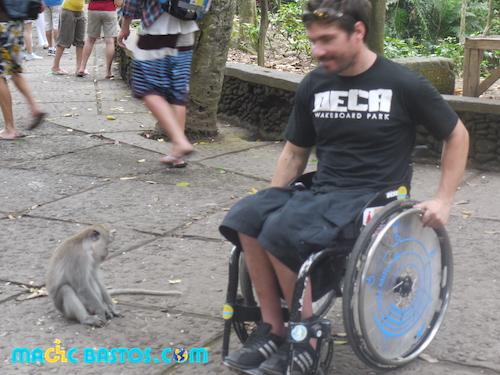 ubud-bali-foret-singe-fauteuil-roulant