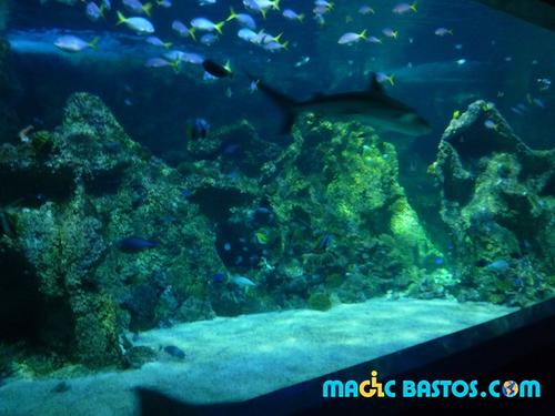 aquarium-sydney-bastos-trip