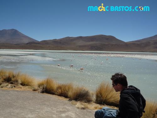flamants-rose-lac-desert-bolivie-handicap