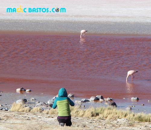 lac-rose-flamants-rose-desert-bolivie