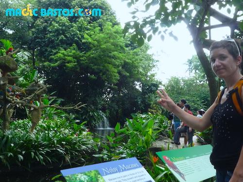 parc-oiseaux-singapour-tourisme-handicap