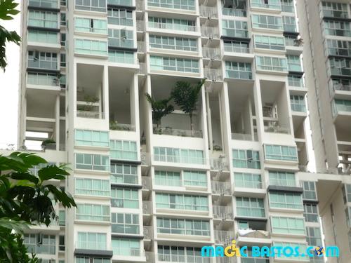 singapour-arbre-immeuble