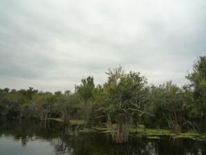 oiseaux-arbre-everglade-floride