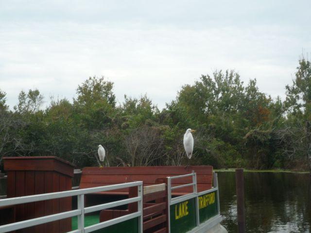 oiseaux-everglades-floride