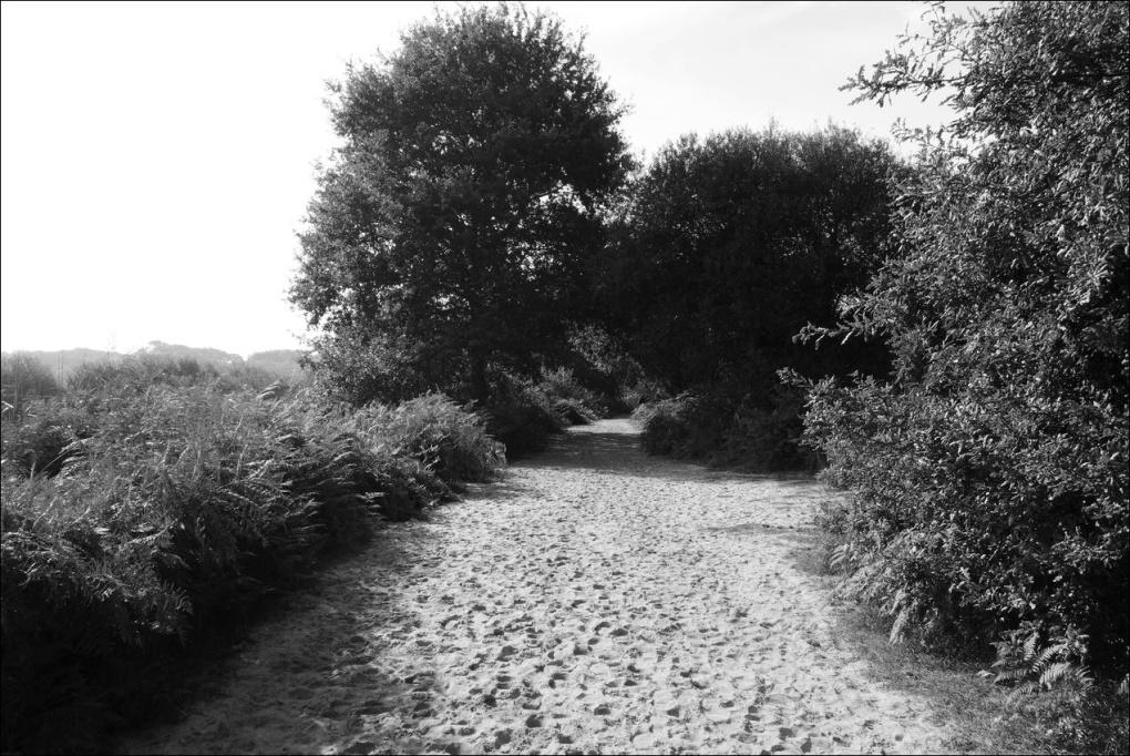 marais-dorx-chemin-sable
