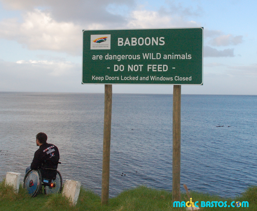 route-capepoint-babouin
