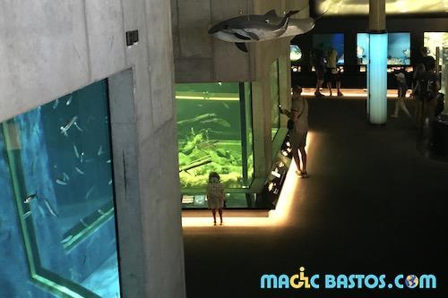 aquarium-skansen-acces-disability